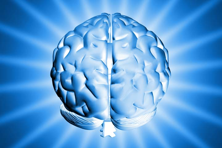 brain-freeimages-com-artM