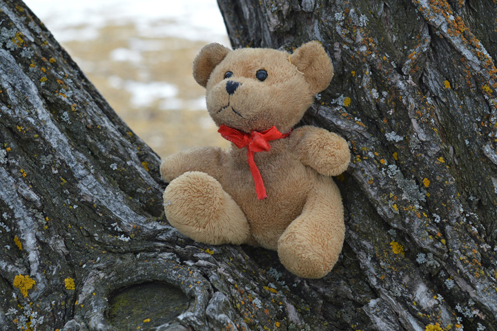 teddy-bear-pixabay